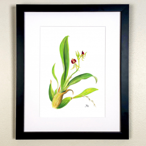 Orchid from Jamaica Print
