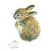 Baby Rabbit Print