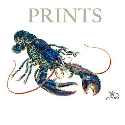 MMscan267 lobster PRINTS