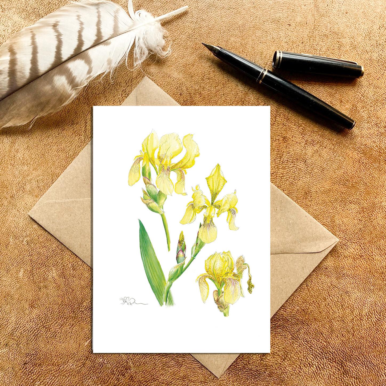 Yellow Bearded Iris Card