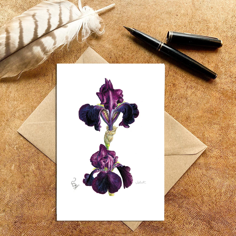 Purple bearded Iris Card