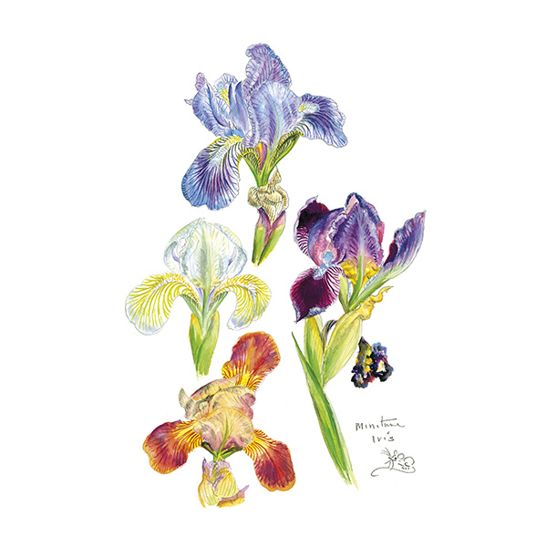 Four colourful Miniature Iris Card