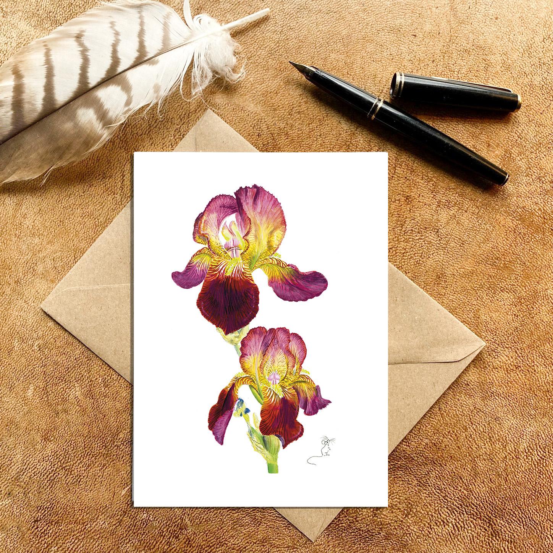 Velvet red & yellow bearded Iris Card