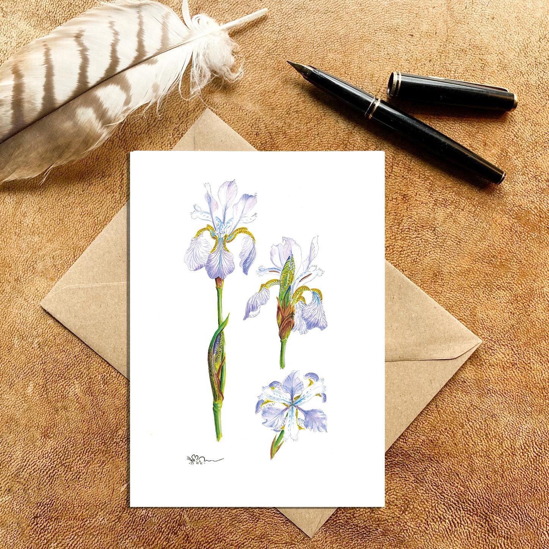 Pale Blue Miniature Iris Card