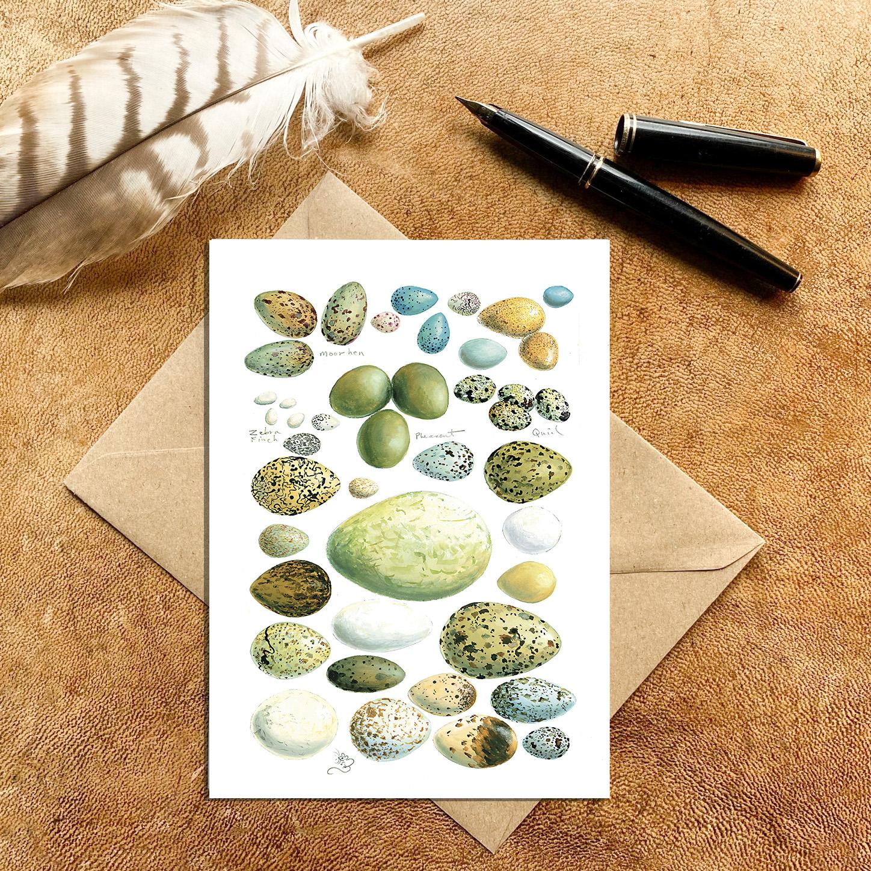 Birds Eggs Card