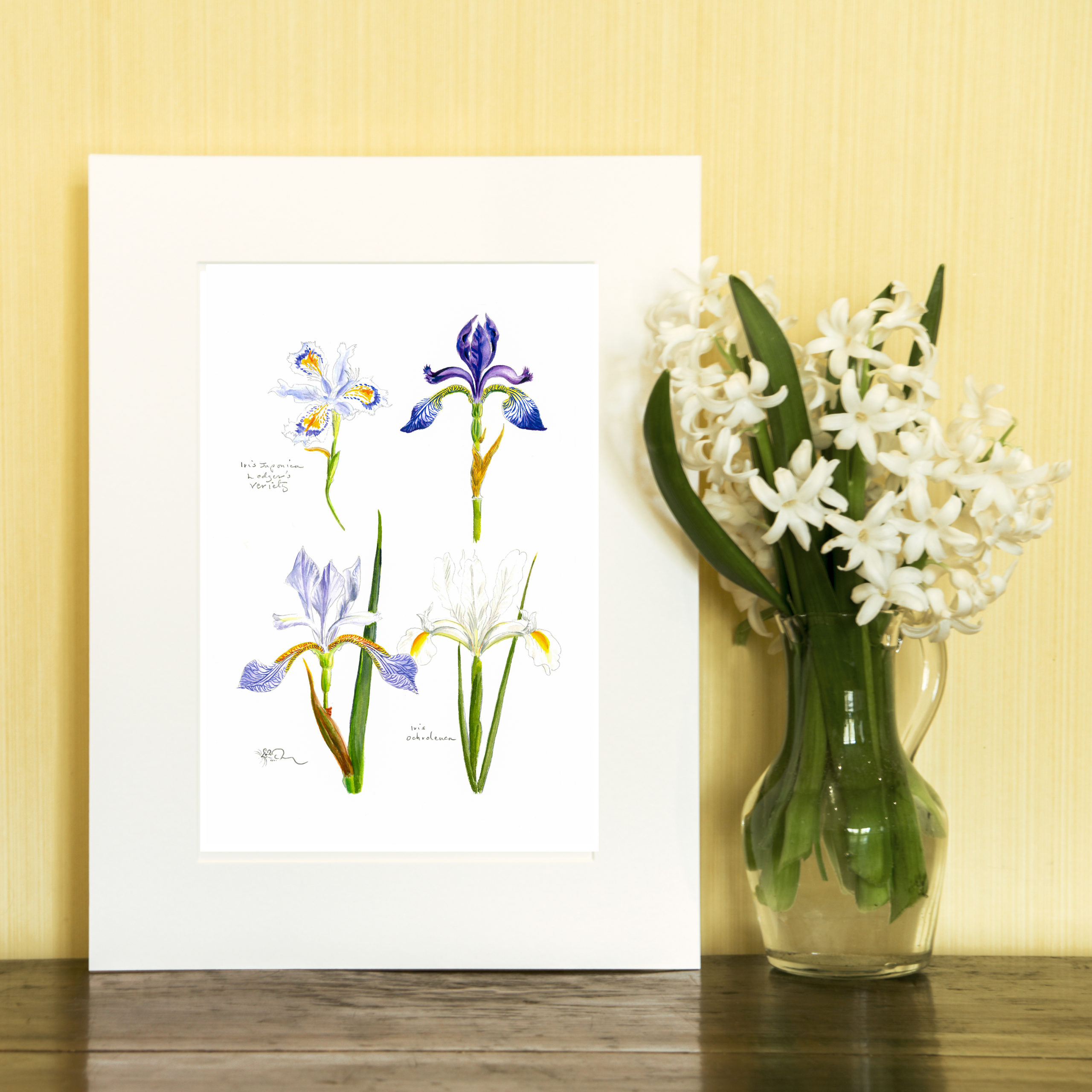 Four Miniature Iris Print